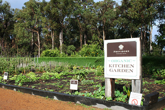 Providore Kitchen garden
