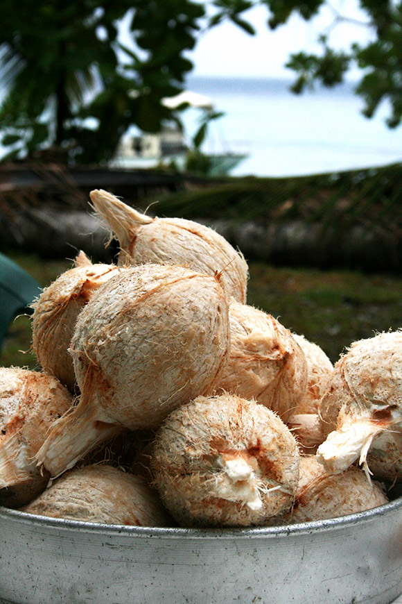 Fresh coconuts served in Bikirin Island, The Marshall Islands